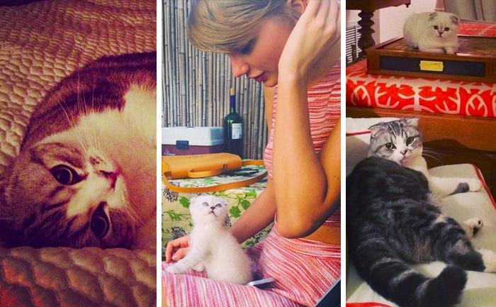 Taylor_Meredith_olivia